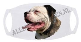 Amerikaanse Bulldog 103 B 1