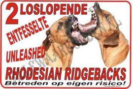 RHODESIAN RIDGEBACK 177 C