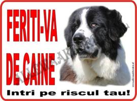 Romanian Shepherd 269 (RO.)
