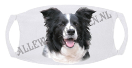 BORDER COLLIE 113