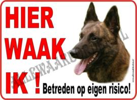 Hollandse Herder 252
