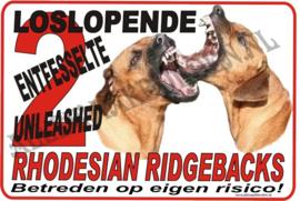 RHODESIAN RIDGEBACK 177 A