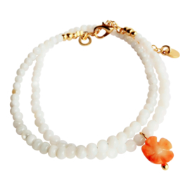 Shell & Coral