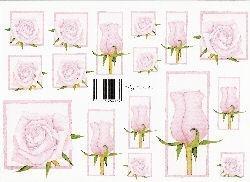 knipvel: roze rozen