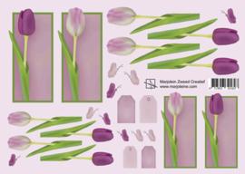 1627 roze/paarse tulpen