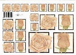 knipvel: bruine rozen