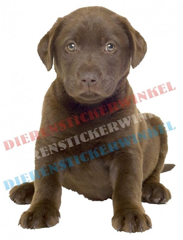 Labrador Bruine Pup