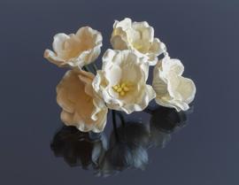 Lotus Ivoor 3,5 cm 5 stuks