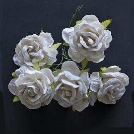 Wild rose Ivory
