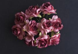 Wild rose  Burgundy/pink