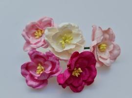 Lotus Mix B 5 stuks  3,5 cm
