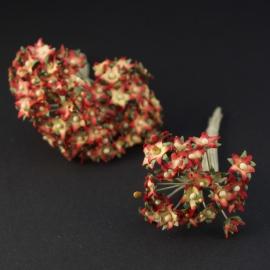 Ster mini sweetheart blossom