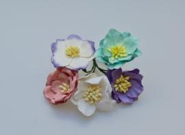 Lotus Mix A 5 stuks  3,5 cm