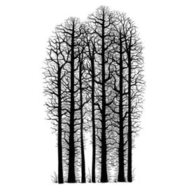 Forest Scene – LAV524