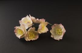 Lotus roze-ivoor