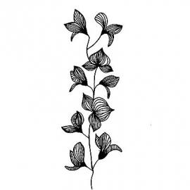 Lavinia Orchid LAV060