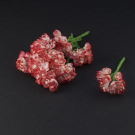 Gypsophila  rood/wit