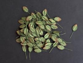 BLF blaadje 100 stuks  tweekleurig groen