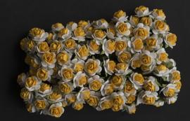 Rose SH yellow/white