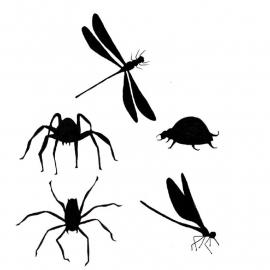 Bugs LAV156