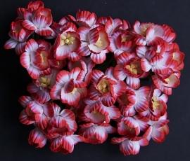 Cherry rood/wit 5 stuks, 2,5 cm
