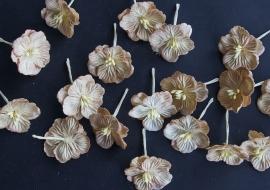 hydrangea's beige