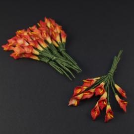 Calla lilie rood/geel