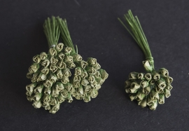 Roosbud groen