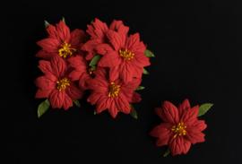 Kerstbloem rood 5