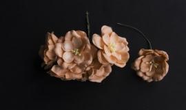 Magnolia Peach