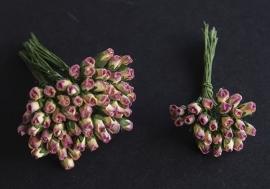 Roosbud cream-paars