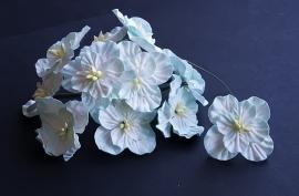 Hydrangea's Turquoise/wit
