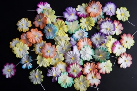Flowers 100