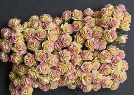 Roos S peach/ cream