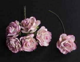 Wild rose 14