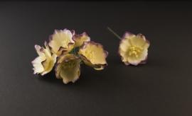 Magnolia paars-ivoor