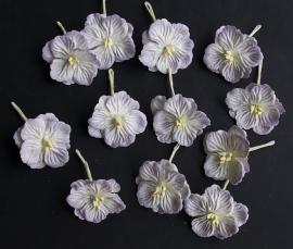 Hydrangea's Lila/wit