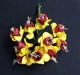 Narcis geel/ bordeaux