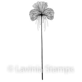 Single Fairy Orchid LAV548