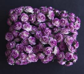 Roos K paars-wit