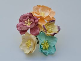 Lotus Mix D  5 stuks  3,5 cm