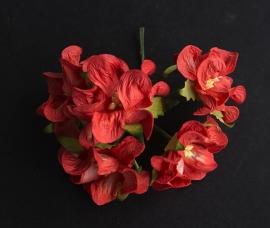 Gardenia rood