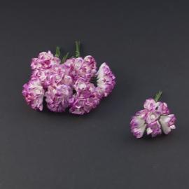 Gypsophila  paars/wit