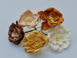 Lotus Mix C 5 stuks  3,5 cm