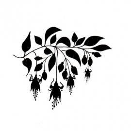 Fuchsia LAV157