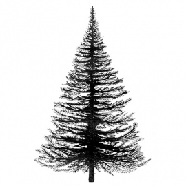 Fir Tree LAV022