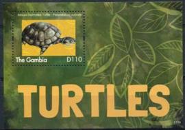 Gambia, schildpadden 2013, xx