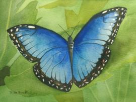 """Blauwe Morpho"" Aquarel 18 X 25 cm"