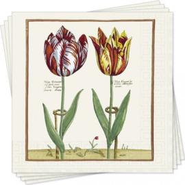 6307 Klassieke tulp