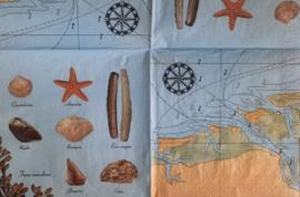 6721 Zee en schelpen